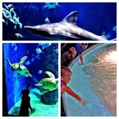 Aquarium - Trey T