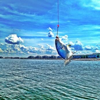Caught a whopper! Chix Beach - Virginia