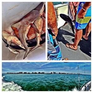 Fishing Sharks Water